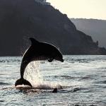 ISP-dolphin